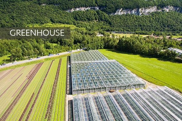 Direkçi Group Greenhouse
